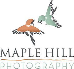 Maple Hill Photography logo